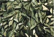 Пайетки в форме листка, Индия, Light Olive, 6*9 мм